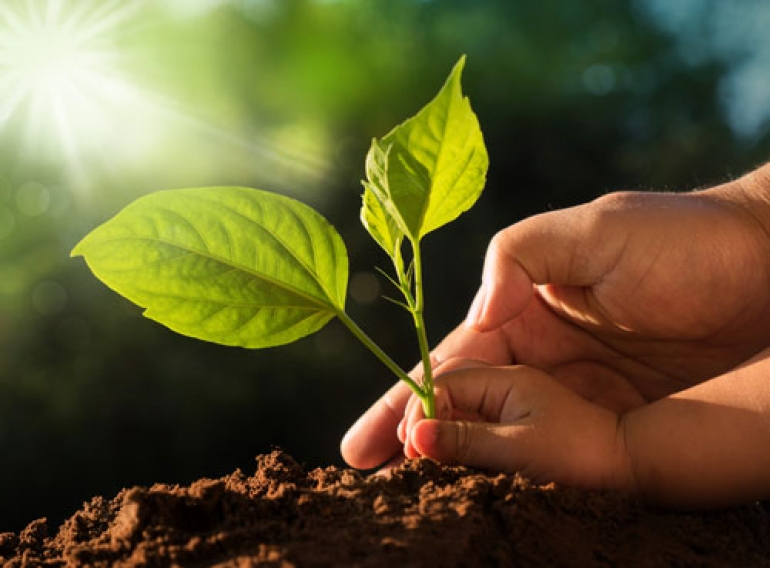 5 Lifestyle Changes that Can Help Protect our Environment